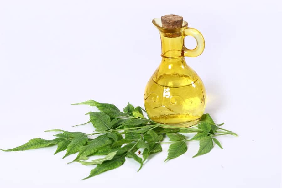 Photo of a glass bottle full of neem oil next to neem leaves against a white backdrop