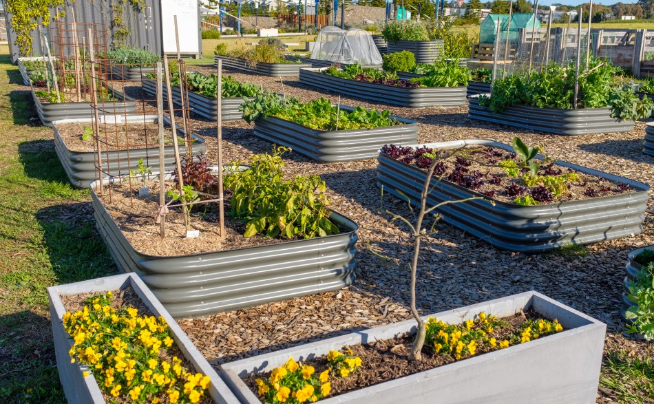 Photo of galvanized steel raised beds set a top woodchips