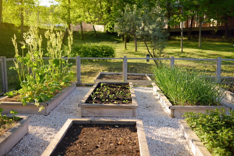 Photo of raised gardening beds set a top pale colored gravel