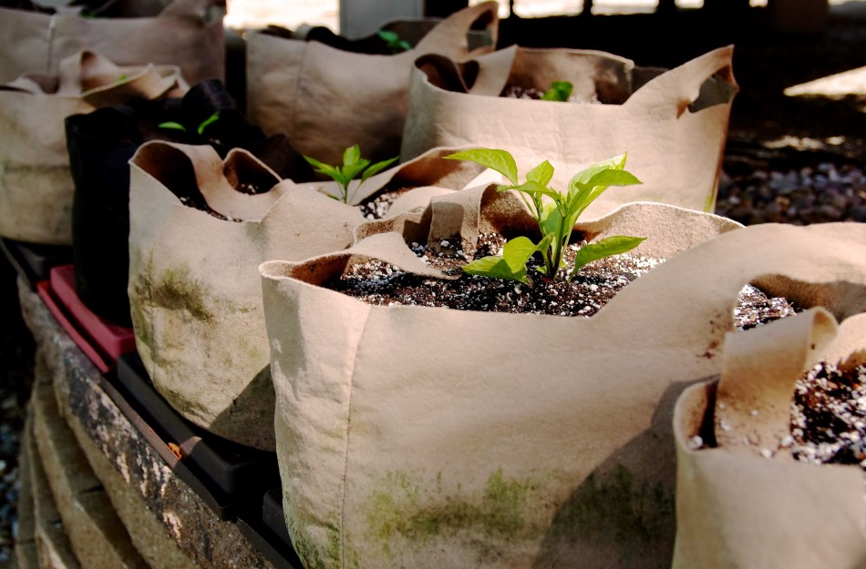 Photo of canvas grow bags filled with soil and plants growing out of them