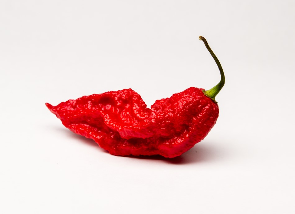 Photo of a fiery hot ripe ghost pepper on a white back drop