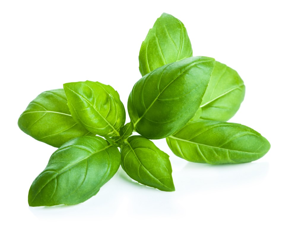 Photo of green basil leaves against a white backdrop